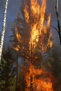 Waldbrand, Versicherung, Wald in Flammen