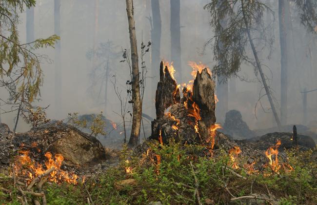 Waldbrandversicherung Wald gegen Feuer versichern