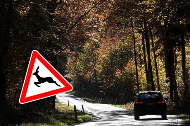 Wildschaden-Versicherung
