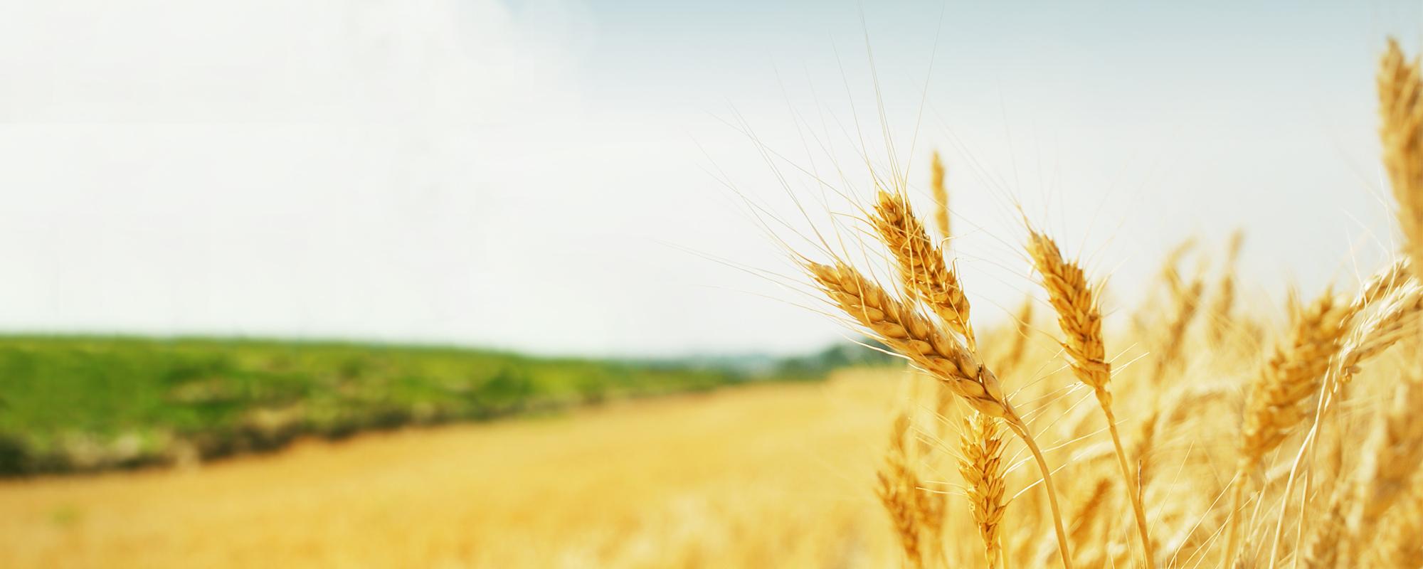 Ihr Partner für <span>landwirtschaftliche Versicherungen</span>